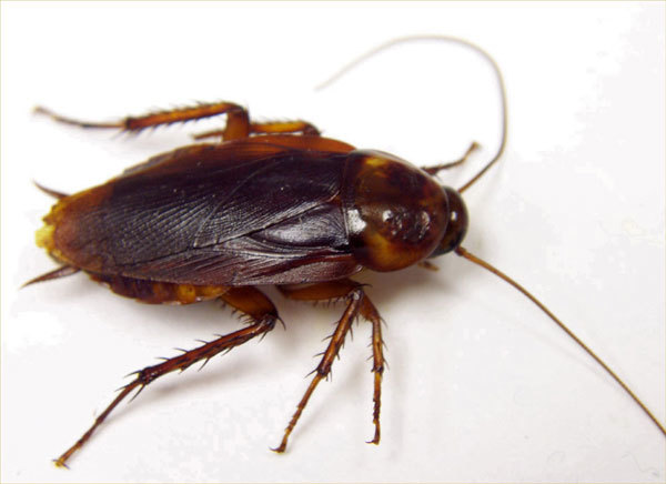 Roach - GROSS!